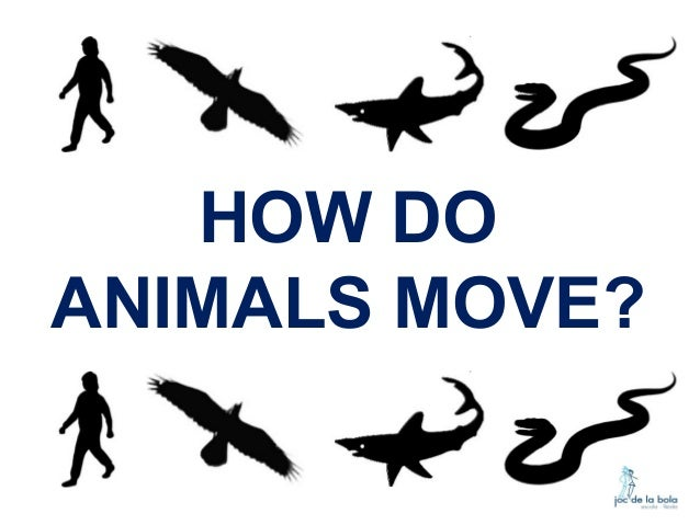 HOW DO ANIMALS MOVE?