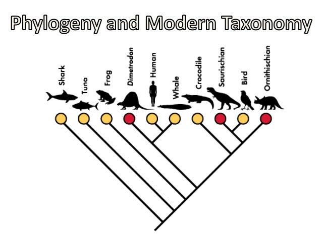 05   phylogeny modern taxonomy