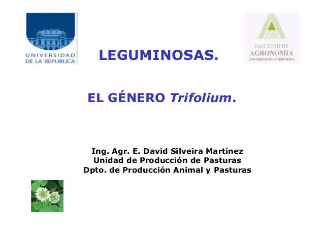 LEGUMINOSAS. EL GÉNERO Trifolium. Ing. Agr. E. David Silveira Martínez Unidad de Producción de Pasturas Dpto. de Producció...
