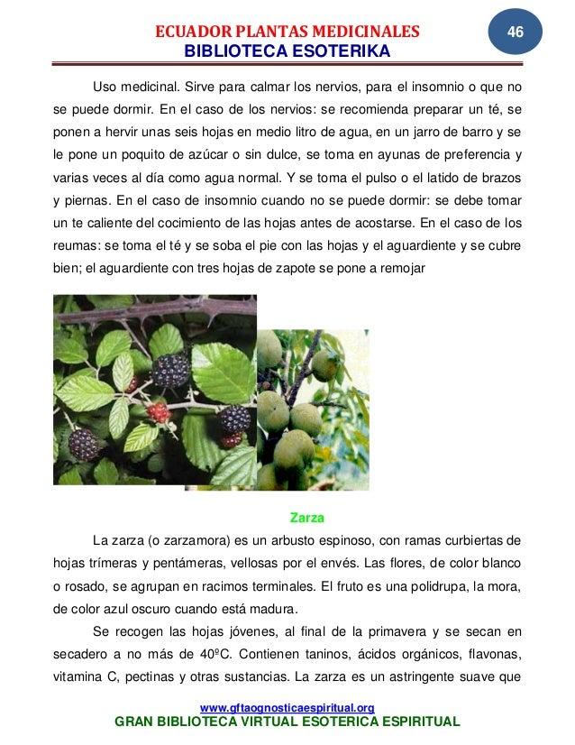 05 04 07 ecuador plantas medicinales www