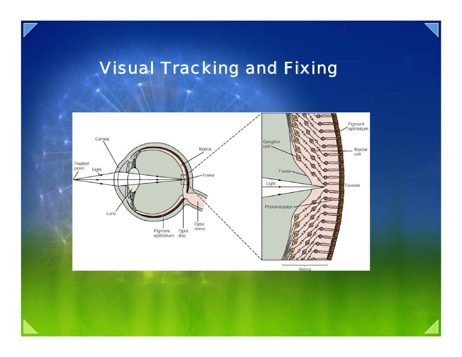 Visual Tracking and Fixing