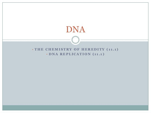DNA • THE CHEMISTRY OF HEREDITY (11.1) • DNA REPLICATION (11.1)