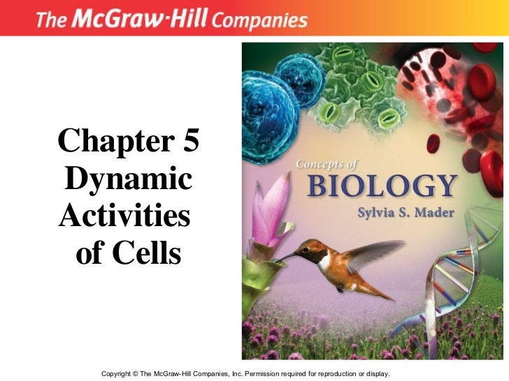 Copyright  ©  The McGraw-Hill Companies, Inc. Permission required for reproduction or display. Chapter 5 Dynamic Activitie...