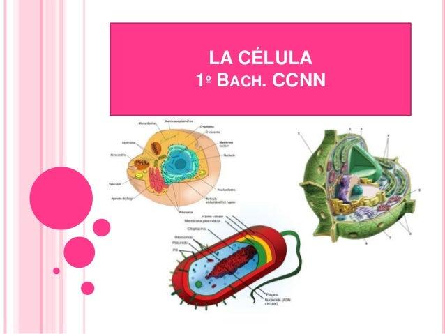 LA CÉLULA 1º BACH. CCNN