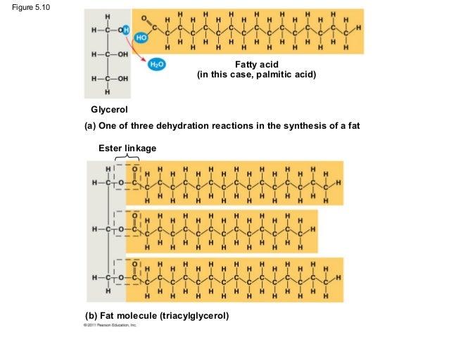 lipids fats phospholipids waxes and steroids