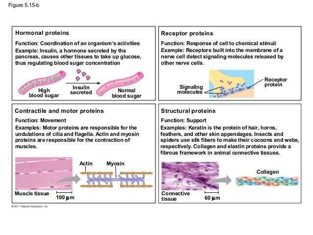the structure and function of proteins biology essay Structure 细胞生物学 cell biology 3 生物 2 详情 0887-3585 proteins proteins-structure function and genetics 生化与分子生物学 3 生物 3 详情.