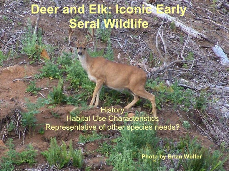 Deer and Elk: Iconic Early Seral Wildlife History Habitat Use Characteristics Representative of other species needs? Photo...