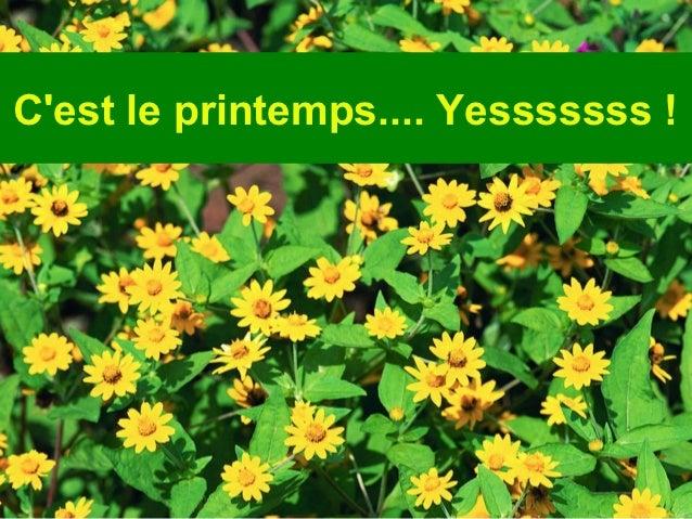 Diaporama PPS réalisé pour        http://www.diaporamas-a-la-con.comCest le printemps.... Yesssssss !