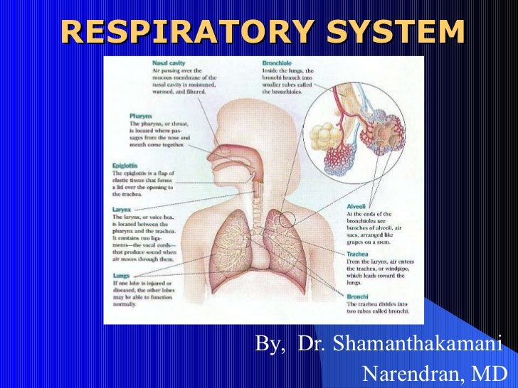 RESPIRATORY SYSTEM By,  Dr. Shamanthakamani  Narendran, MD