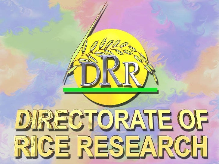 0604 Directorate of Rice Research's Experience of SRI Method of Rice Cultivation
