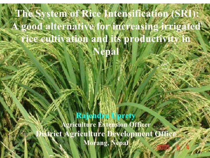 The System of Rice Intensification (SRI): A good alternative for increasing irrigated rice cultivation and its productivit...