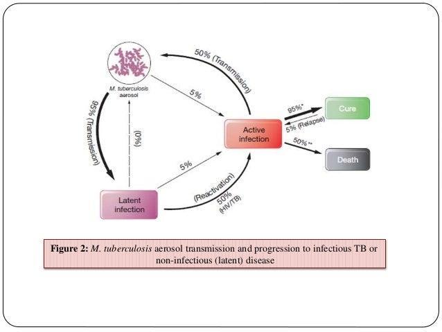 Phd thesis on tuberculosis