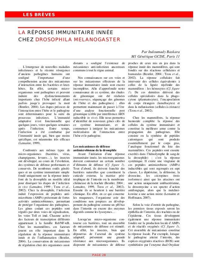 LES BRÈVES PAGE 28 LA RÉPONSE IMMUNITAIRE INNÉE CHEZ DROSOPHILA MELANOGASTER Par Indoumady Baskara M1 Génétique GCDE, Pari...