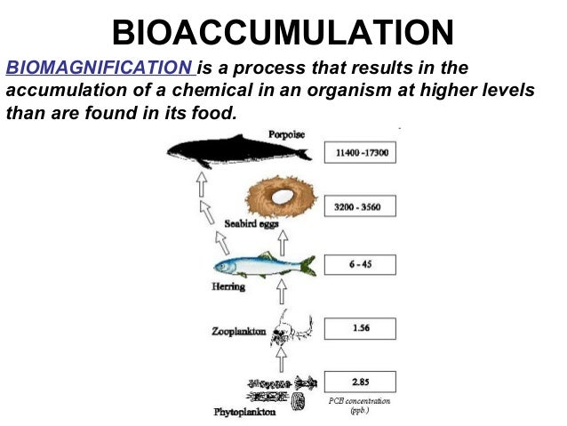 06 bioaccumulation