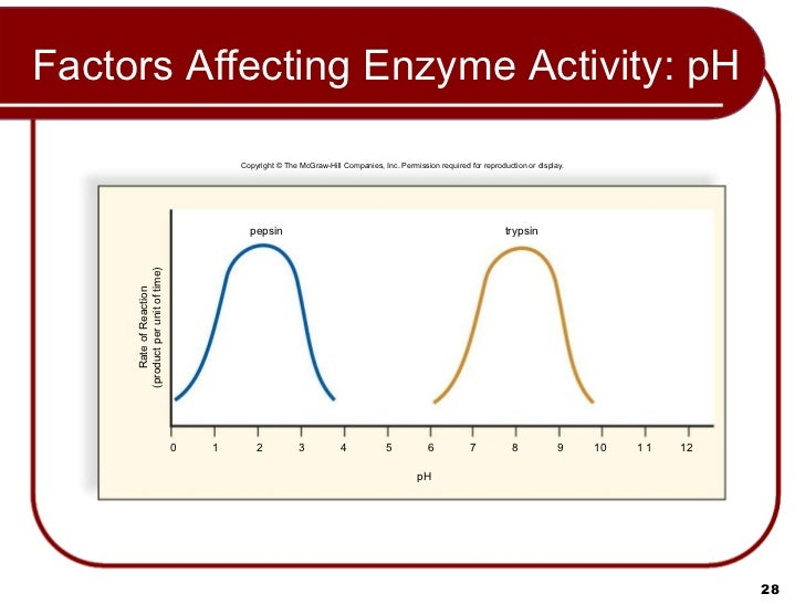 the factors affecting enzyme activity