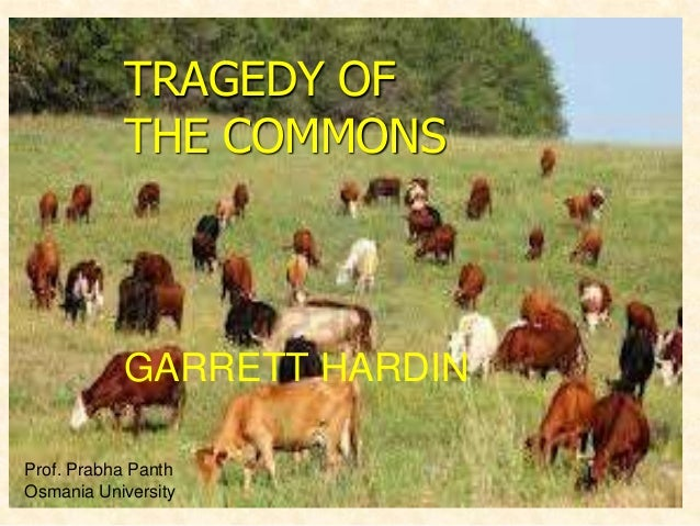 TRAGEDY OF THE COMMONS  GARRETT HARDIN Prof. Prabha Panth Osmania University