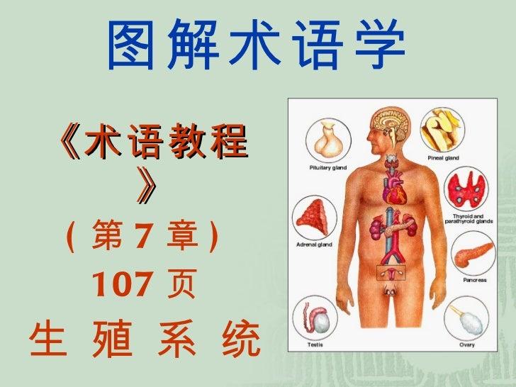 系统 图解术语-07-生殖