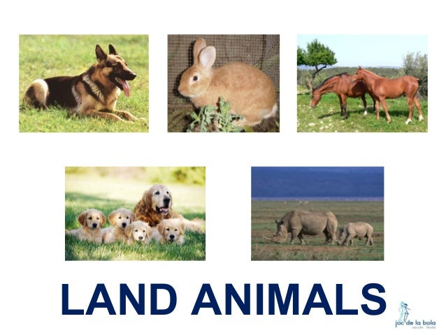First land animals on earth