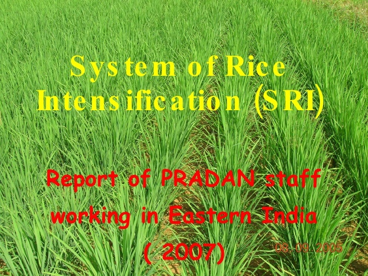 System of Rice Intensification (SRI) Report of PRADAN staff working in Eastern India ( 2007)