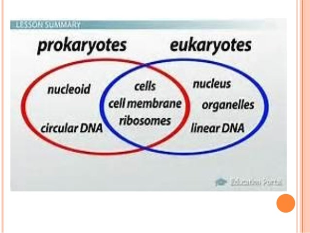 difference between prokaryotic cell and eukaryotic cell pdf