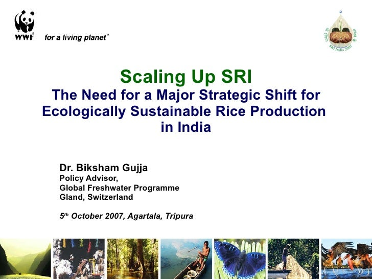 Scaling Up SRI The Need for a Major Strategic Shift for Ecologically Sustainable Rice Production  in India Dr. Biksham Guj...
