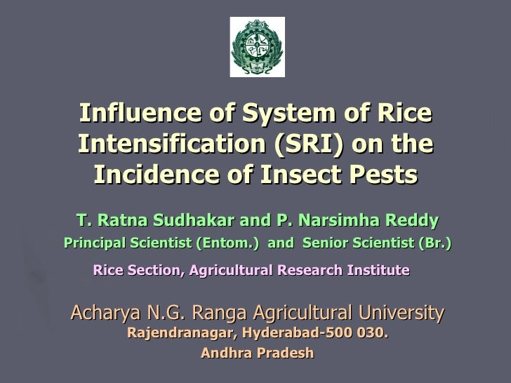 Influence of System of Rice Intensification (SRI) on the Incidence of Insect Pests <ul><li>T. Ratna Sudhakar and P. Narsim...