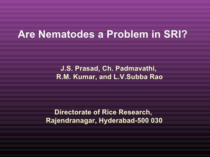 Are Nematodes a Problem in SRI?  Directorate of Rice Research,  Rajendranagar, Hyderabad-500 030 J.S. Prasad, Ch. Padmavat...