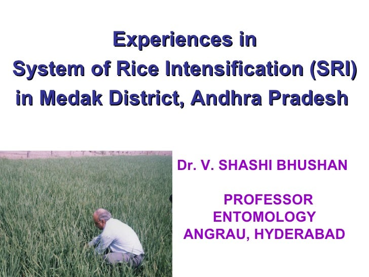 Experiences in System of Rice Intensification (SRI) in Medak District, Andhra Pradesh  Dr. V. SHASHI BHUSHAN    PROFESSOR ...