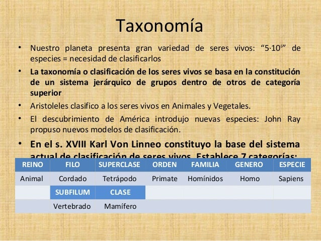 074 taxonomia for Taxonomia de la jirafa