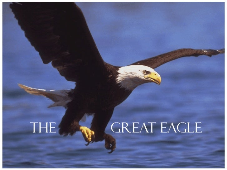 Ellis Skolfield's Teaching Outline 07a The Great Eagle