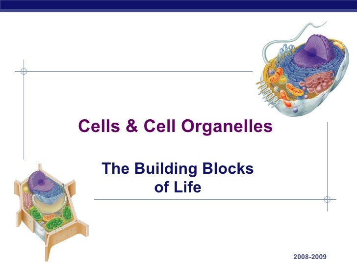 2008-2009 Cells & Cell Organelles The Building Blocks of Life