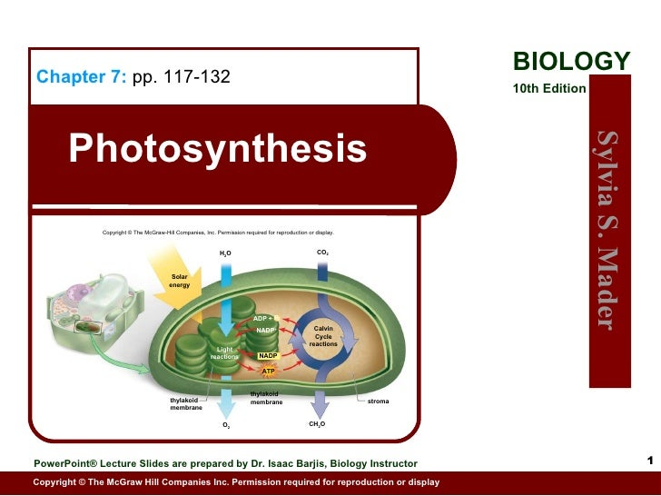 Photosynthesis Chapter 7:   pp. 117-132 Copyright © The McGraw-Hill Companies, Inc. Permission required for reproduction o...