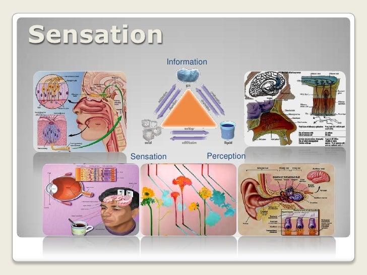 Information<br />Perception<br />Sensation<br />Sensation<br />