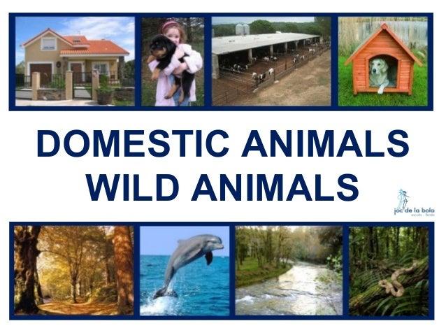 DOMESTIC ANIMALS WILD ANIMALS