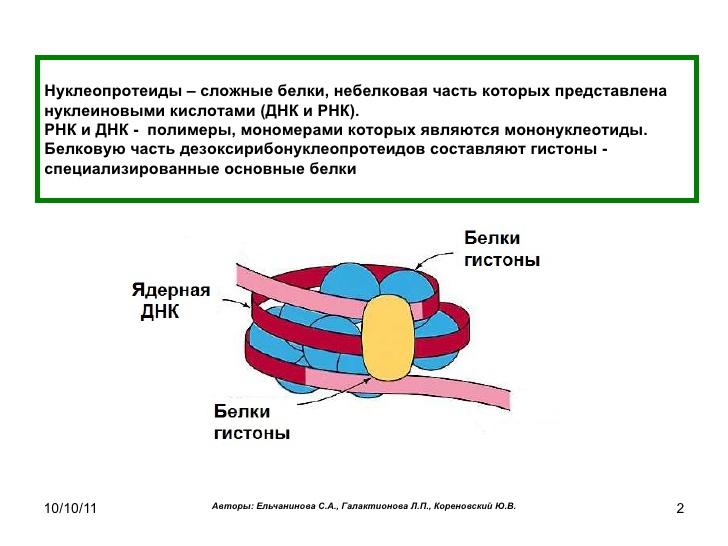 Нуклеопротеин фото