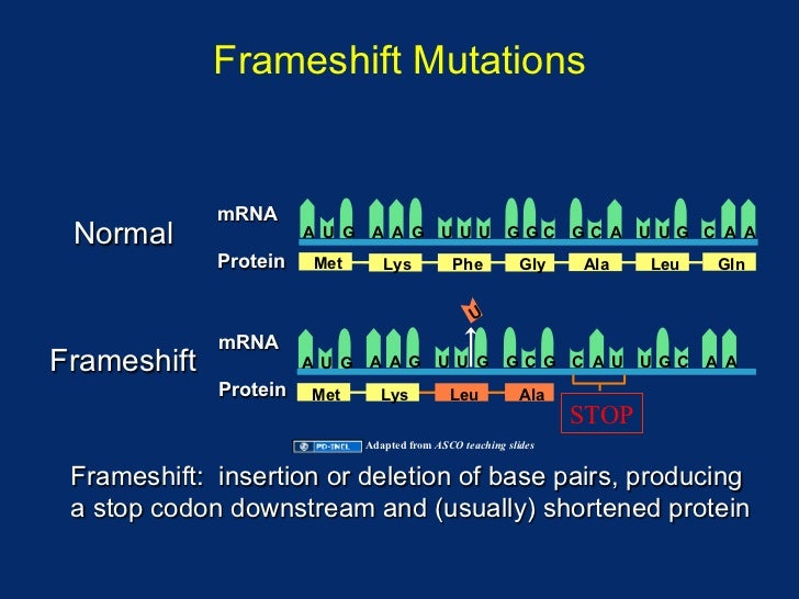 Bits and Bytes of Biology: What is frame shift mutation ?