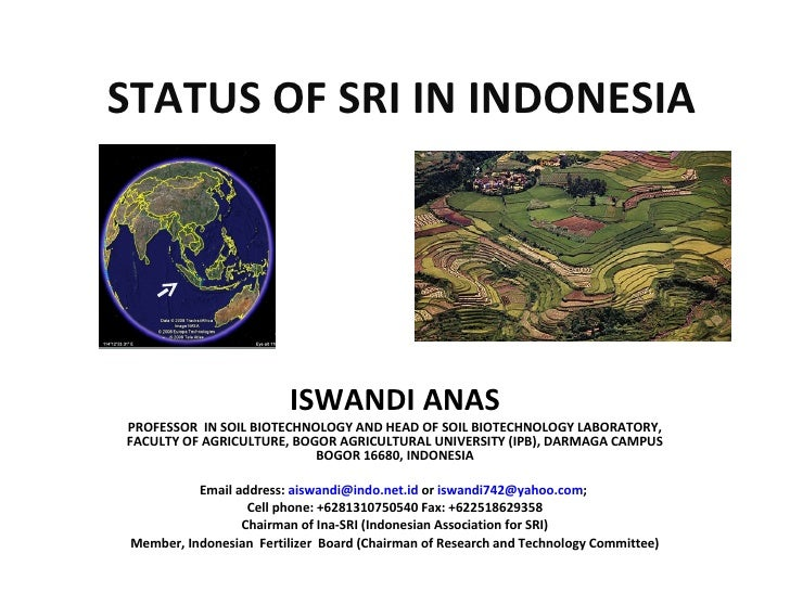 STATUS OF SRI IN INDONESIA ISWANDI ANAS PROFESSOR  IN SOIL BIOTECHNOLOGY AND HEAD OF SOIL BIOTECHNOLOGY LABORATORY, FACULT...