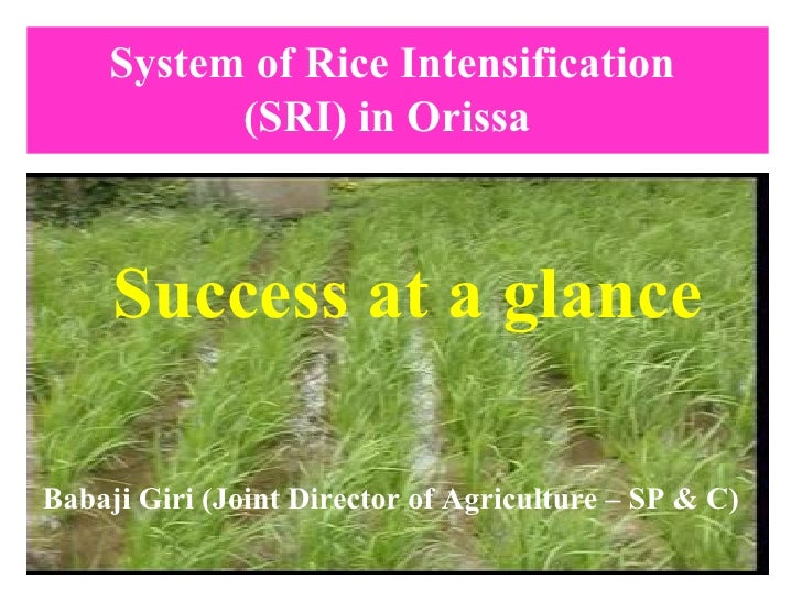System of Rice Intensification  (SRI) in Orissa   Success at a glance Babaji Giri (Joint Director of Agriculture – SP & C)