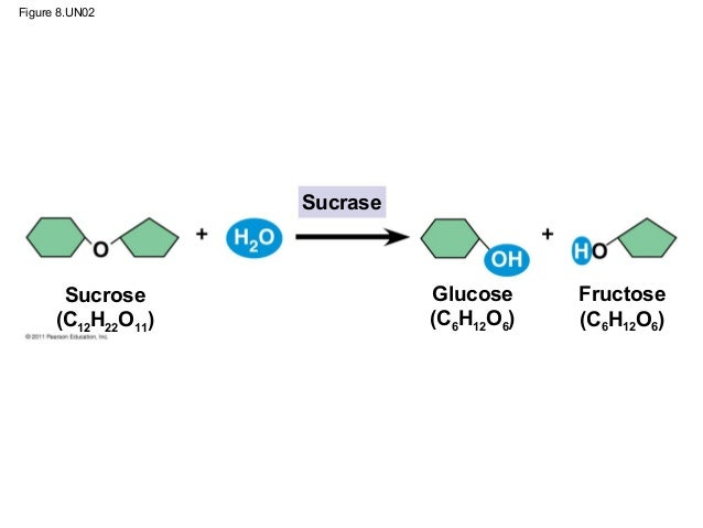 chapter 8 an introduction to metabolism pdf