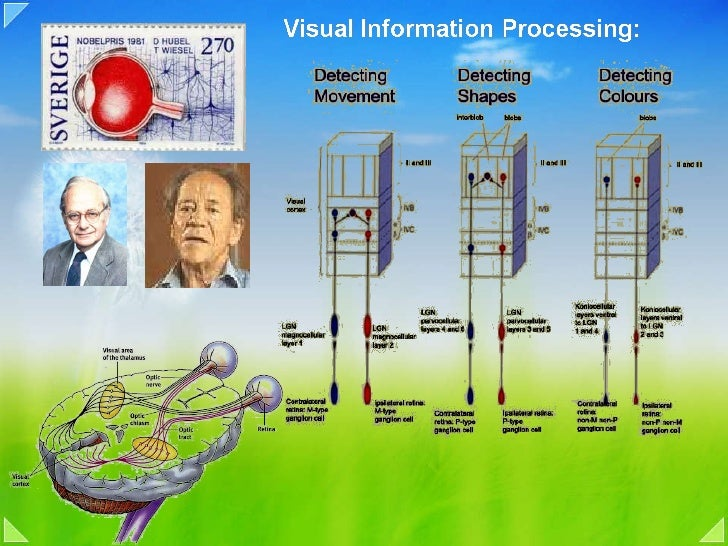 08a vision processing intorduction