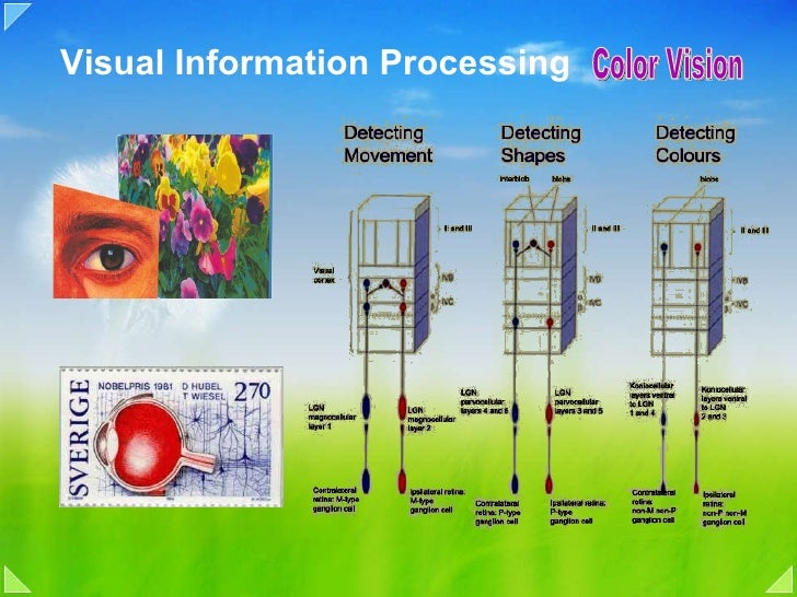 Visual Information Processing  Color Vision
