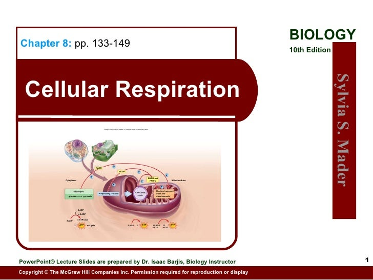 Cellular Respiration Chapter 8:   pp. 133-149 Electron transport chain and chemiosmosis Mitochondrion Citric acid cycle Pr...