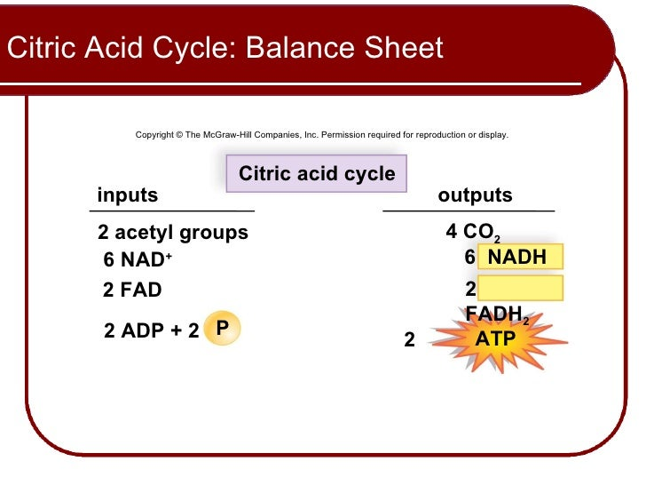 Citric Acid Cycle Net Input And Output Citric Acid Cycle Balance