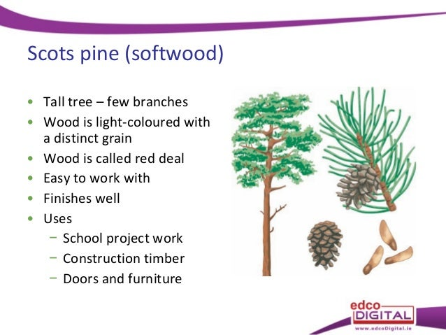 Hardwood And Softwood Trees ~ Types of tree