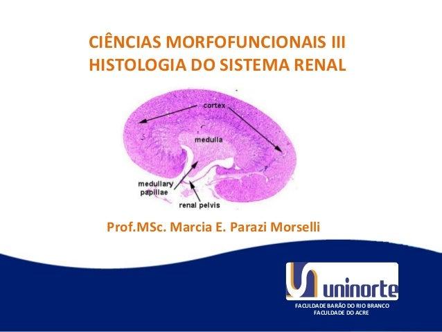 Prof. Marcia Parazi Morselli FACULDADE BARÃO DO RIO BRANCO FACULDADE DO ACRE CIÊNCIAS MORFOFUNCIONAIS III HISTOLOGIA DO S...