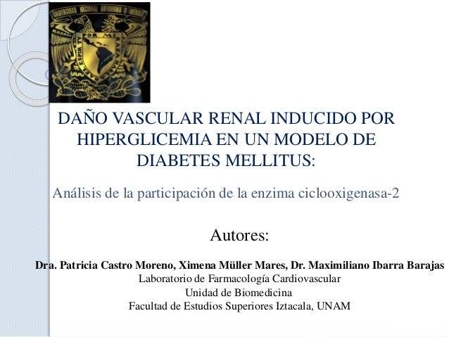 DAÑO VASCULAR RENAL INDUCIDO POR HIPERGLICEMIA EN UN MODELO DE DIABETES MELLITUS: Análisis de la participación de la enzim...