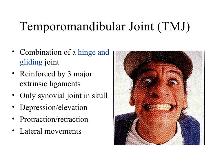 Temporomandibular Joint (TMJ) <ul><li>Combination of a  hinge and gliding  joint </li></ul><ul><li>Reinforced by 3 major e...