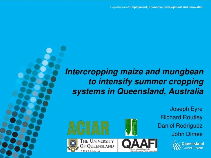Intercropping maize and mungbean to intensify summer cropping systems in QLD, Australia. Joseph Eyre