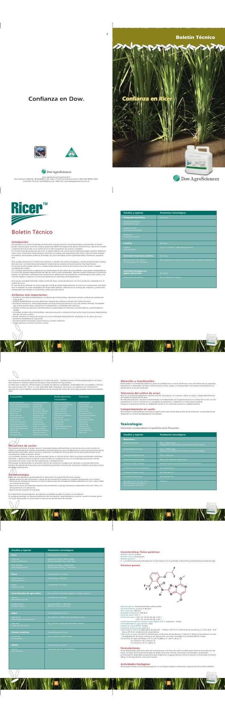 Boletín Técnico     Confianza en Ricer