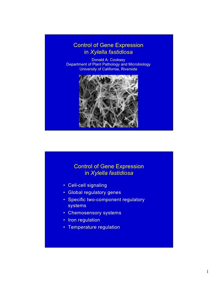 Control of Gene Expression        in Xylella fastidiosa               Donald A. Cooksey  Department of Plant Pathology and...